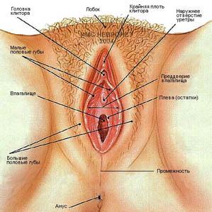 Женское влагалище
