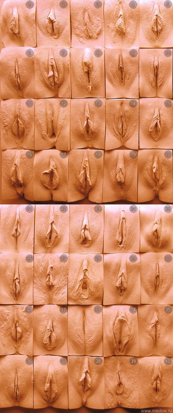 Формы женских влагалищ фото 8 фотография