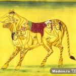 Камасутра. Картинка 85