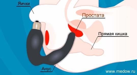 Как пользоваться массажером простаты. Где находится простата и как ее стимулировать при помощи массажера.